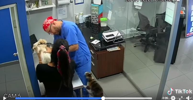 Veterinario assalito dal gatto vendicatore