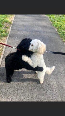Abbraccio cani foto twitter