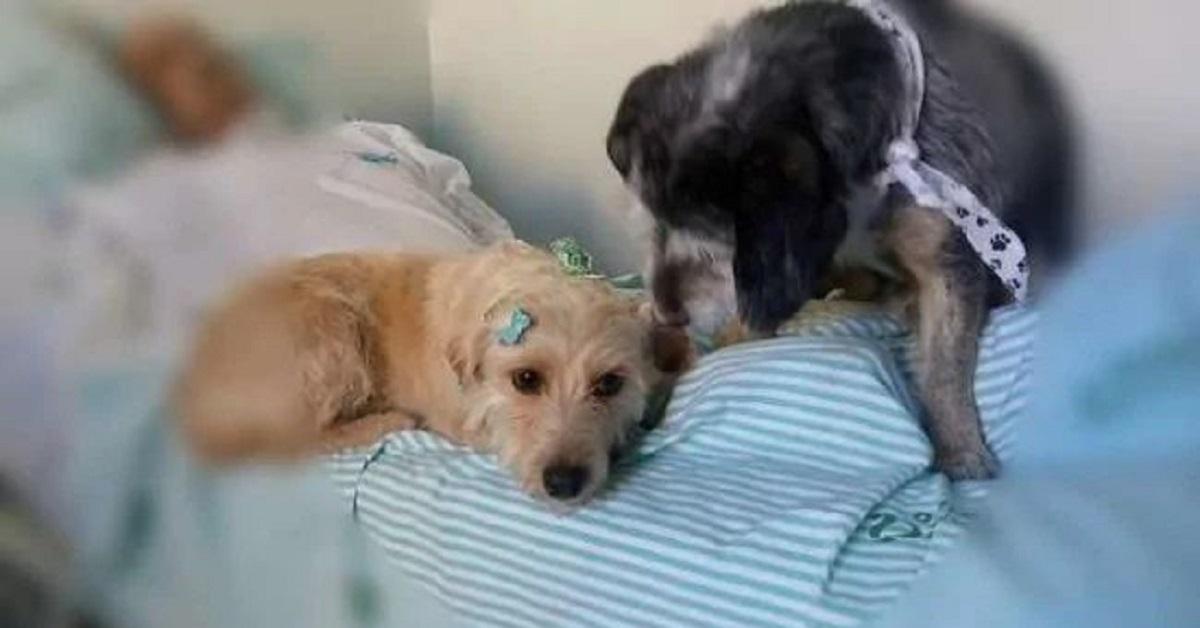 cani ospedale