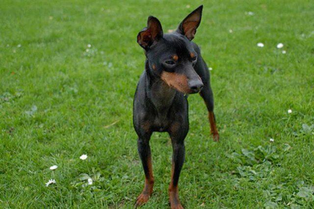 Castelfranco, cane avvelenato dai ladri