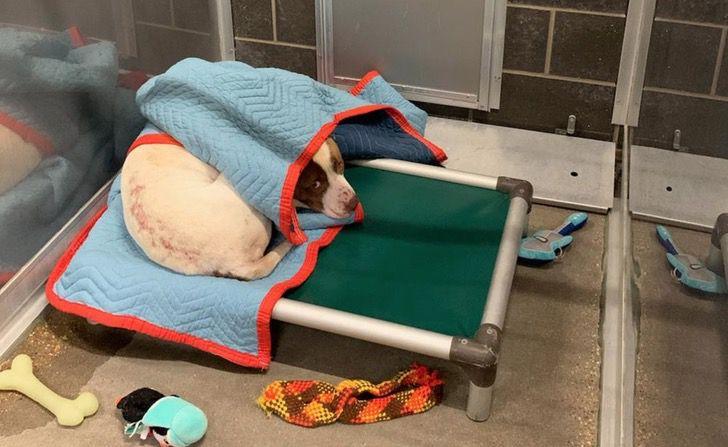 Cane riposa nel rifugio