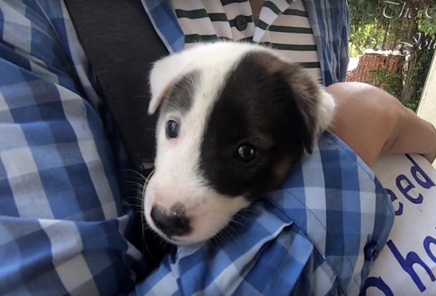 Soccorritori salvano il cucciolo di 8 settimane