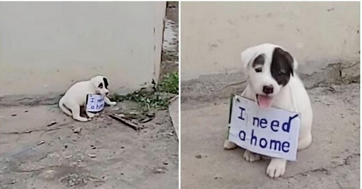 Cucciolo di cane lasciato da solo