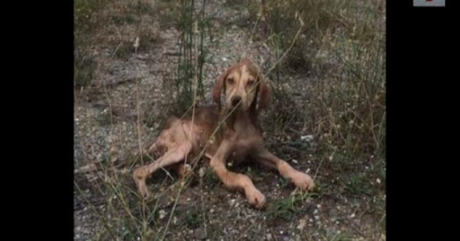Cucciolo abbandonato in autostrada