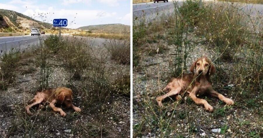 Cane trovato solo in autostrada