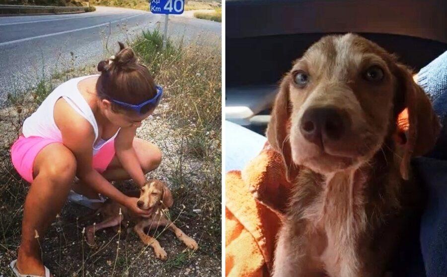 Donna salva il cucciolo