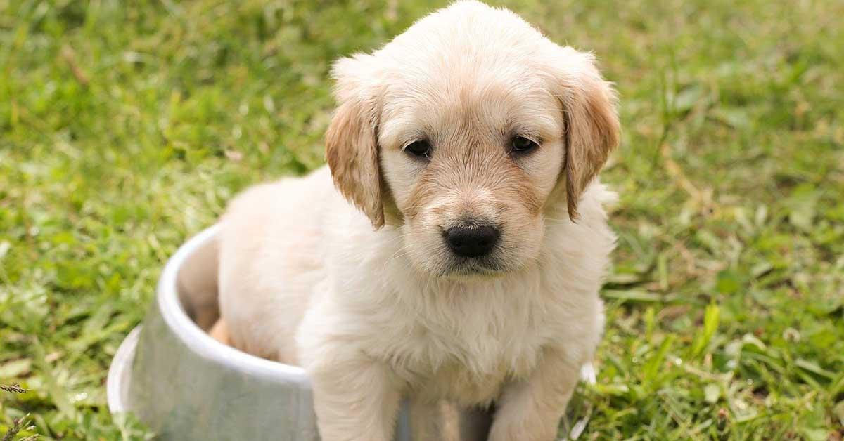 domande da porsi prima di adottare un cane