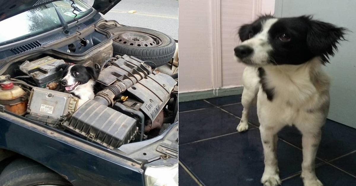 Cane intrappolato nel motore dell'auto