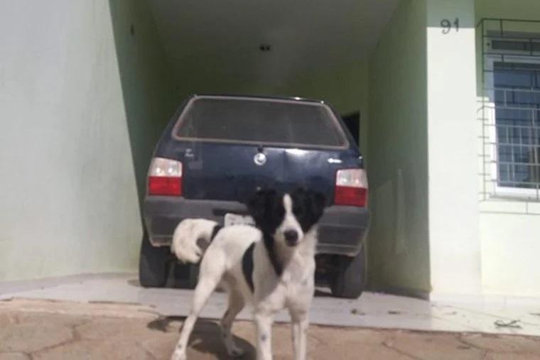 Cane salvato dal motore dell'auto