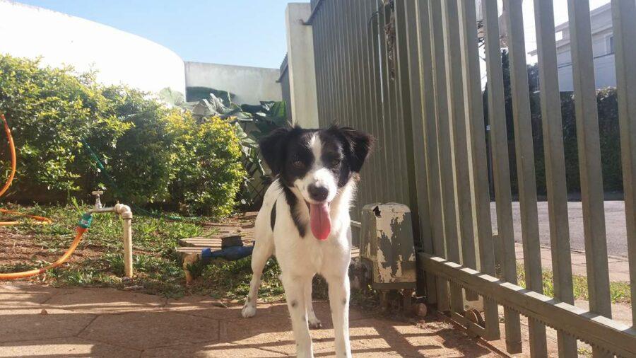 Il cane felice dopo il salvataggio