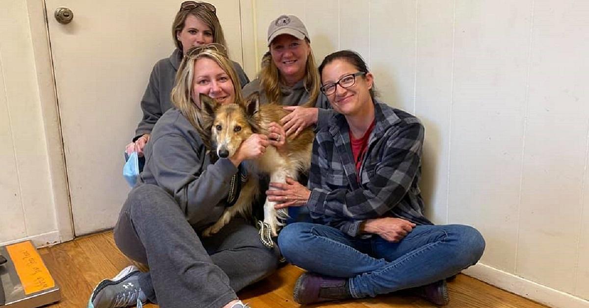 Cane salvato dagli animalisti