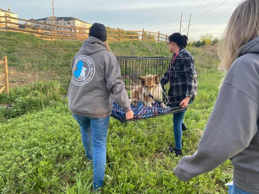 Cane salvato dai soccorritori