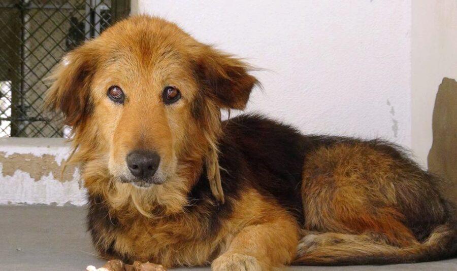Cutie cane abbandonato