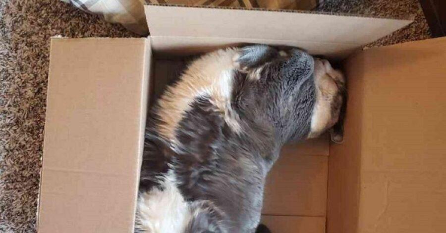 Luna la gatta sovrappeso