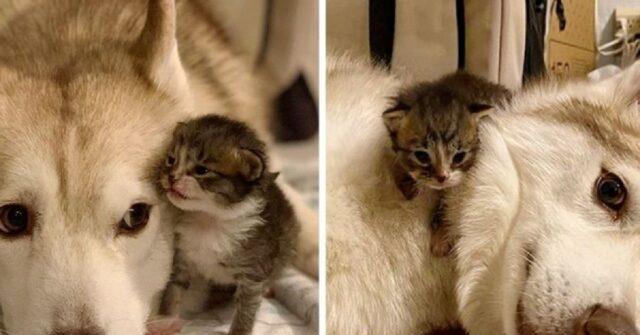 gattini scambiano Lilo mamma
