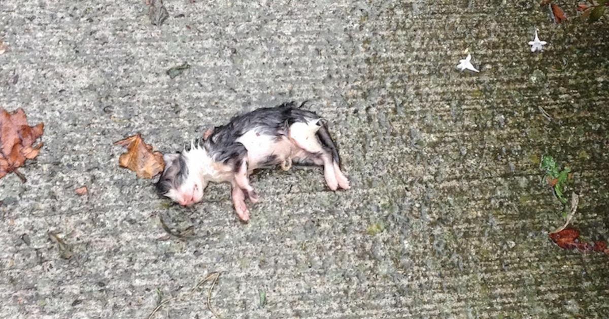 Gattino neonato trovato in strada