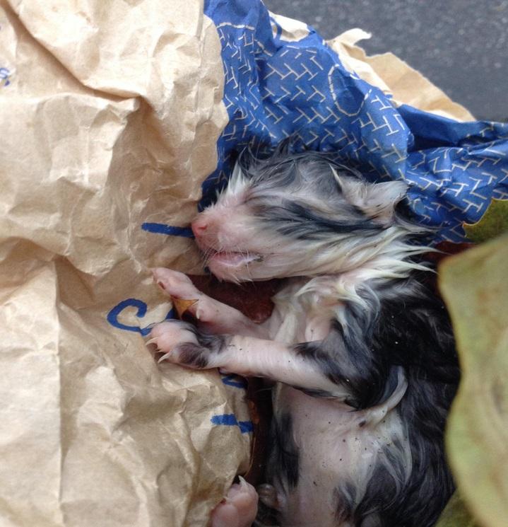 Gattina appena nata
