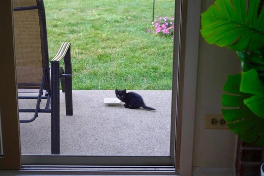 Gattino mangia dalla ciotola
