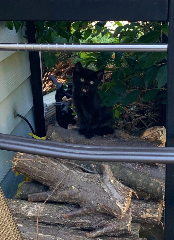 Gattino randagio vive nel giardino