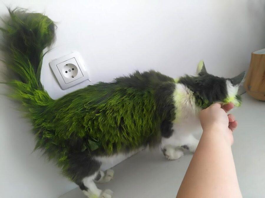 Gatto dalla pelliccia verde