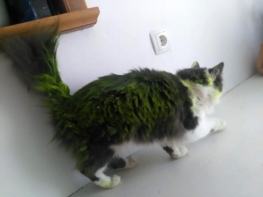 Vernice verde sul gatto Niela
