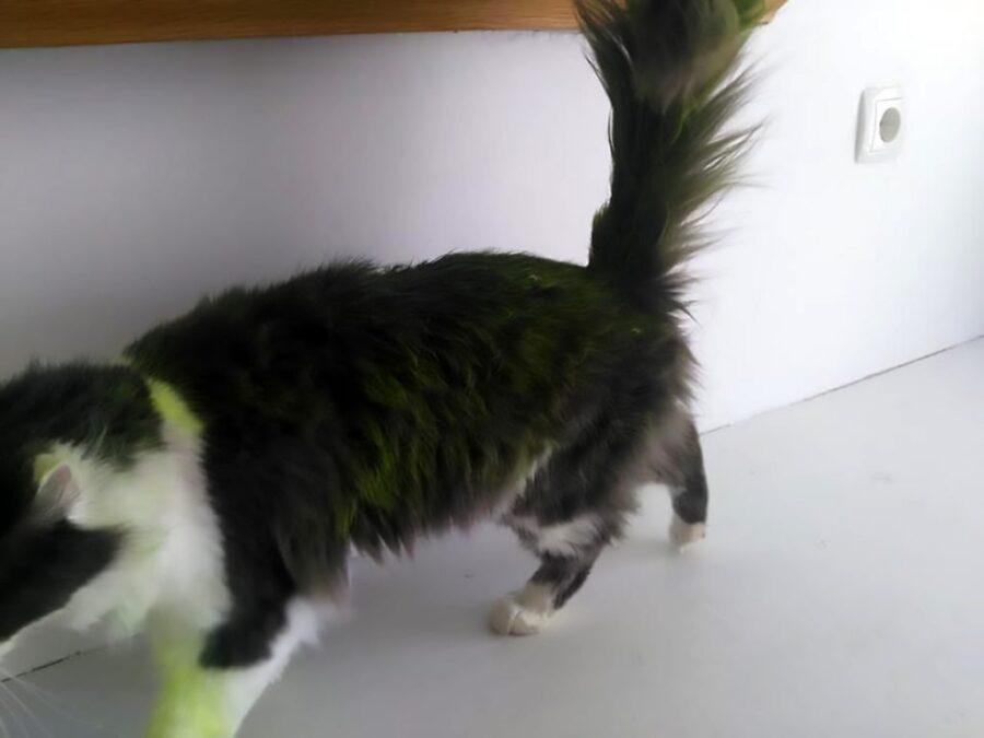 Gatto pitturato di verde