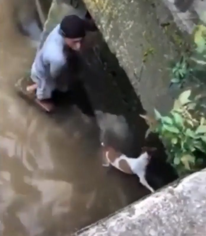 Giovane scende nel fiume per salvare il cane