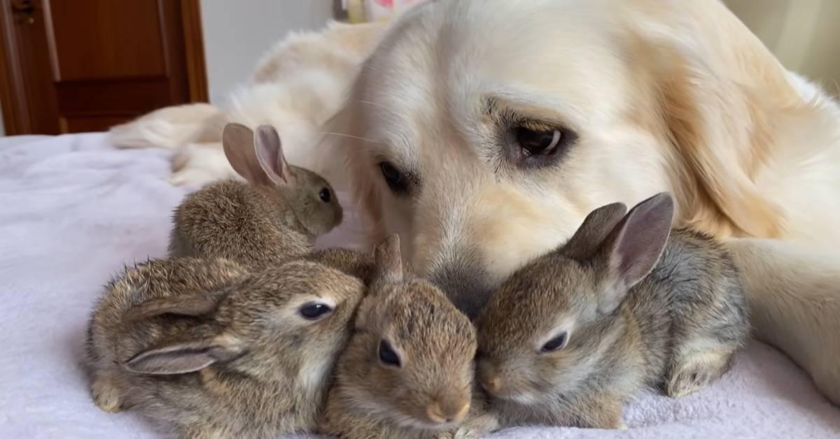 cane e coniglietti