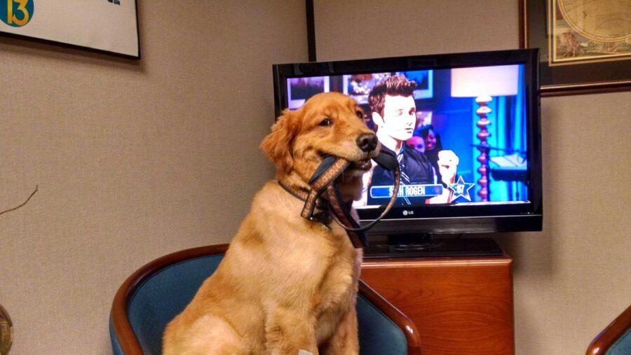 Cane davanti alla tv