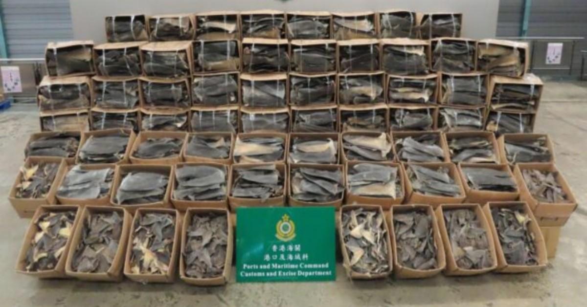 Sequestrate pinne di squali ad Hong Kong