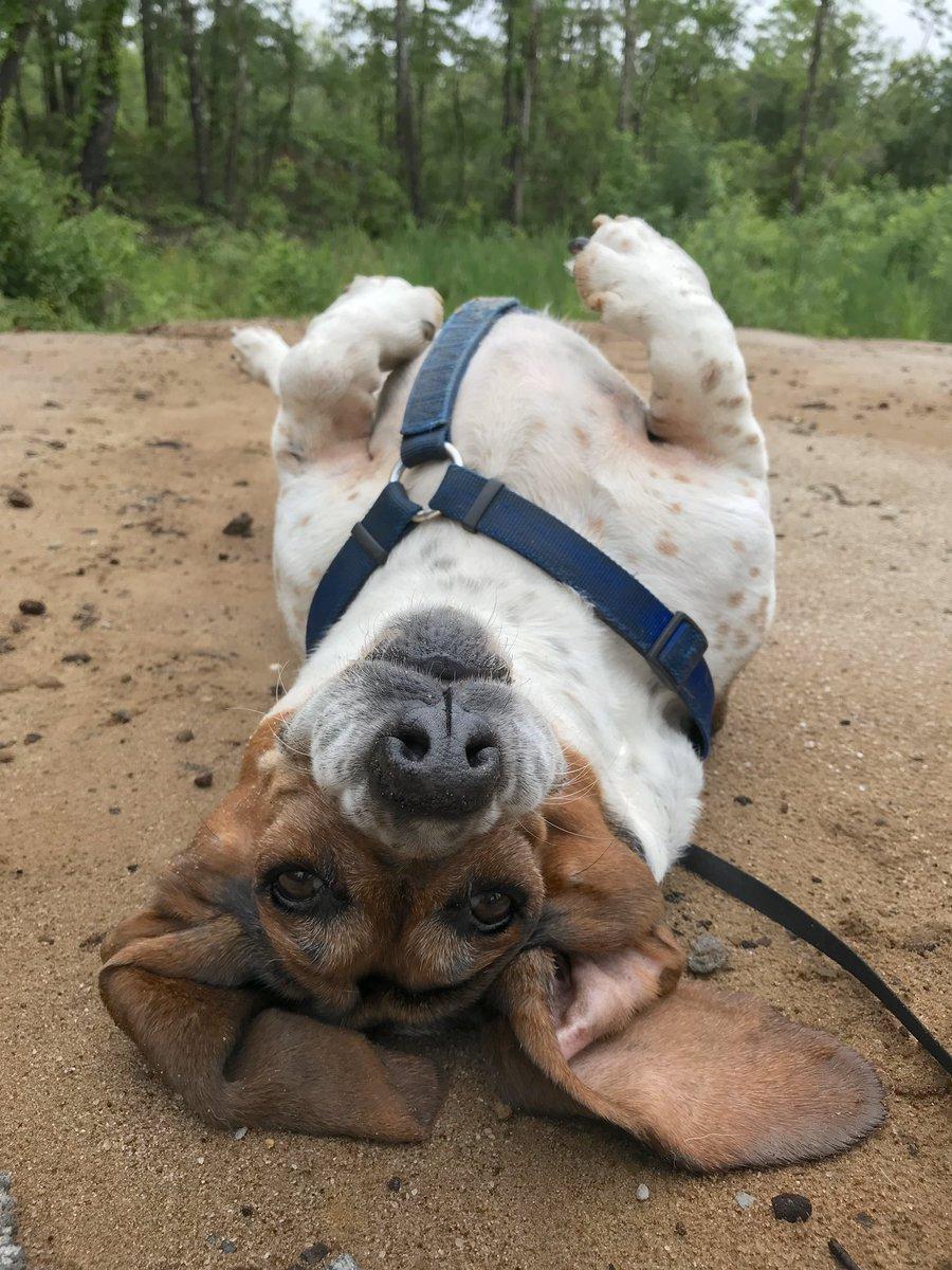 Stella il cane di Stacey Buck