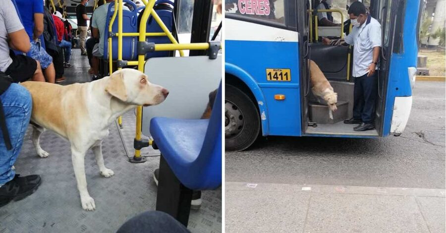 Cane cerca proprietari sui bus