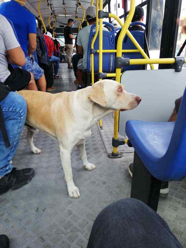 Cane smarrito sale sul bus