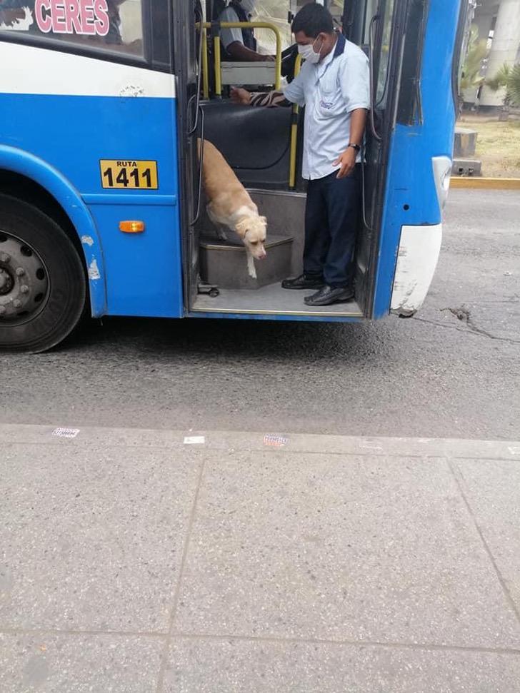 Il cane Gringo scende dal bus