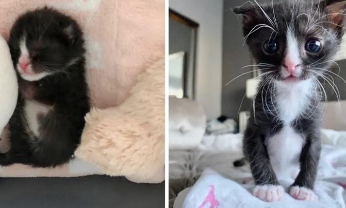 Zoey la gattina coraggiosa