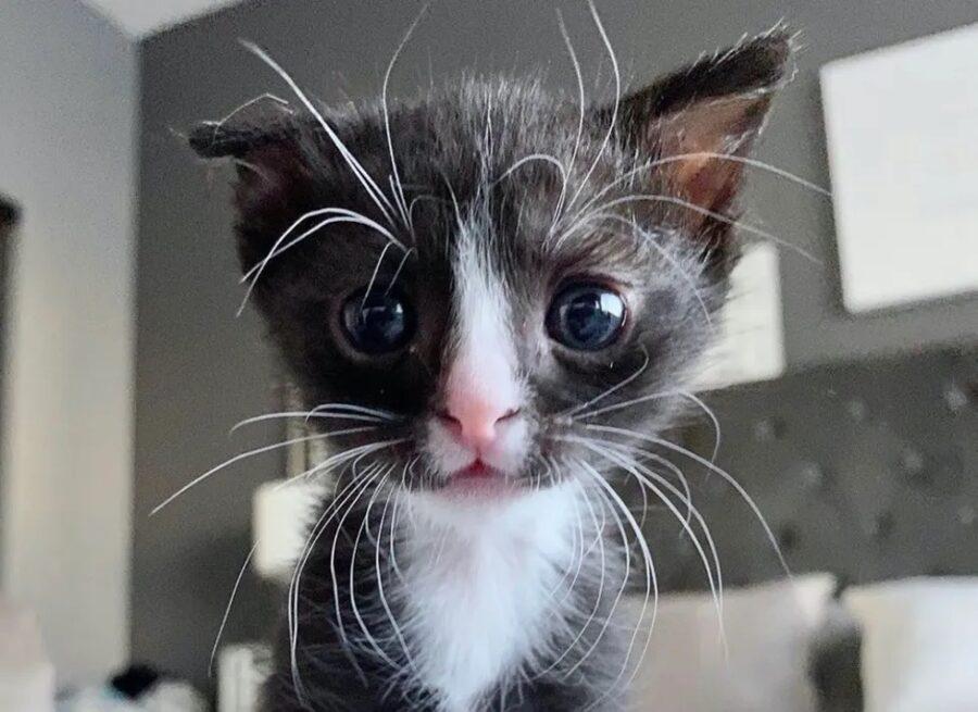 Zoey la gattina orfana