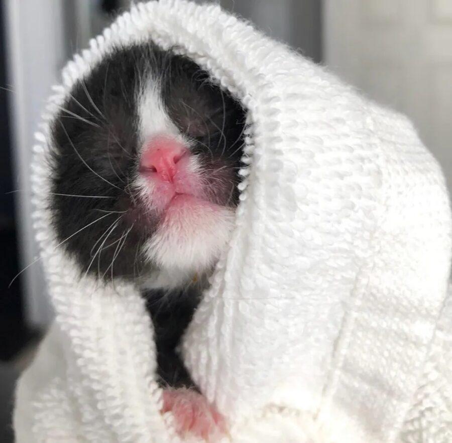 La gattina Zoey salvata