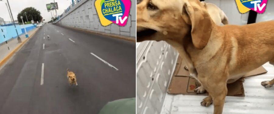 Cane salvato in Perù