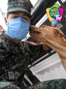 Marinaio in Perù salva un cane