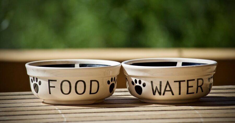 ciotola del cibo del cane