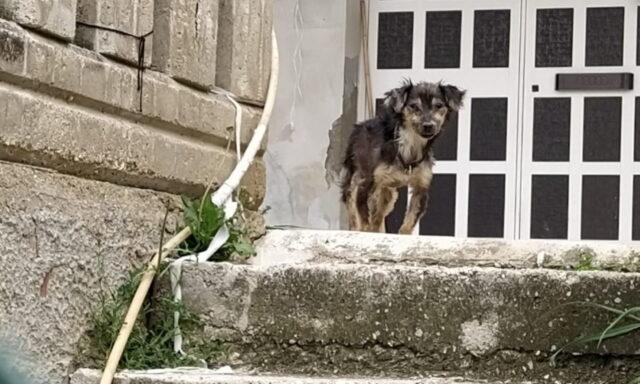Durante lockdown, il cane Libero è stato abbandonato