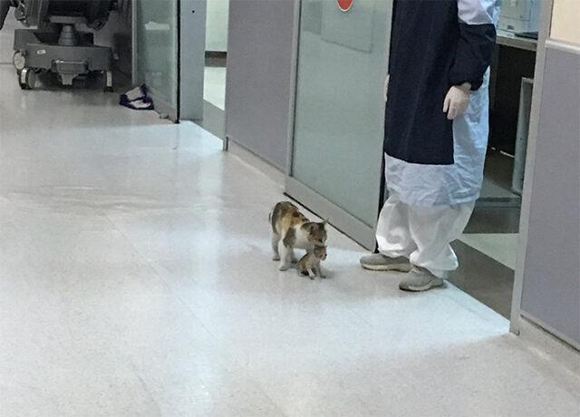 Il gattino malato è stato portato in ospedale dalla sua mamma