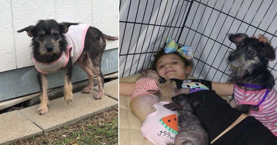 Mamma malata e cuccioli cercano casa