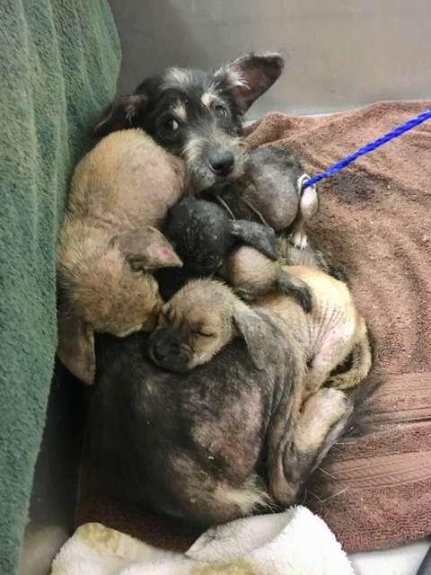 Mamma con i cuccioli vivono al rifugio