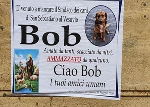 San Sebastiano al Vesuvio, morto Bob il sindaco dei cani
