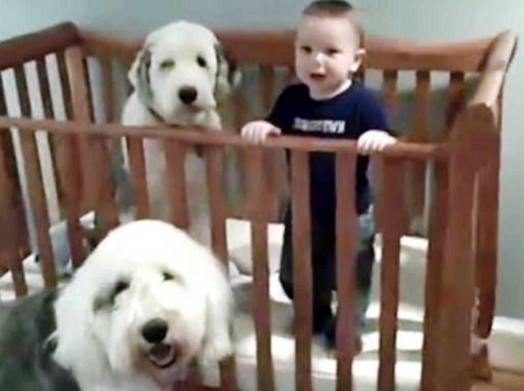bimbo e cani