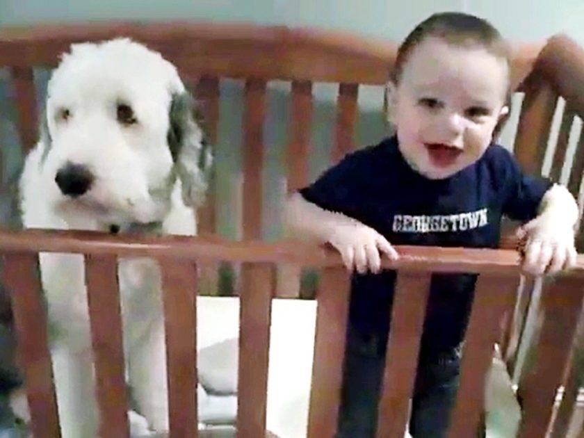 bobtail e bambino