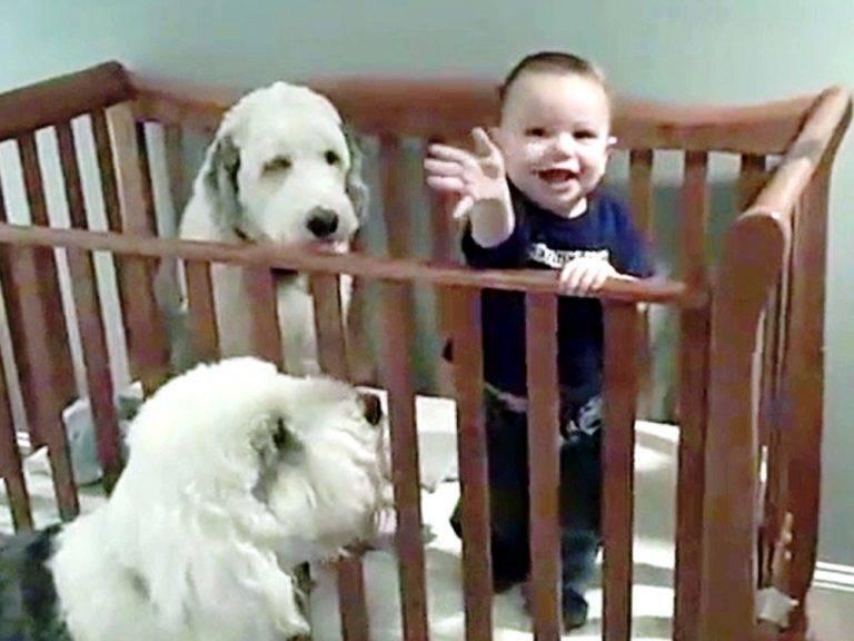 bambino con i suoi cani