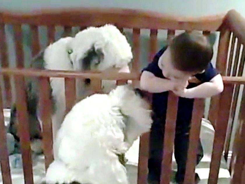 cani e bambino