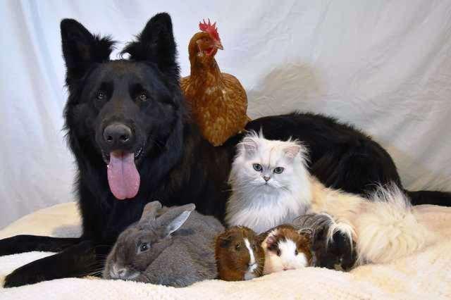 Gli amici animali di Nuka